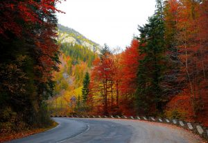forest-road-1345751_960_720